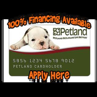 Financing Options Available - Petland Dallas, Texas