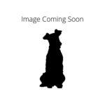 Petland Dallas, TX Dandie Dinmont Terrier