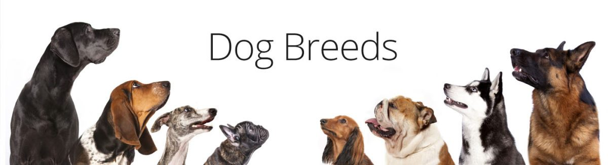 Dog Breed Information - Petland Dallas, Texas